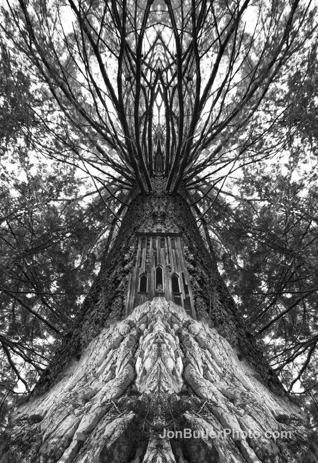 Tree watermark