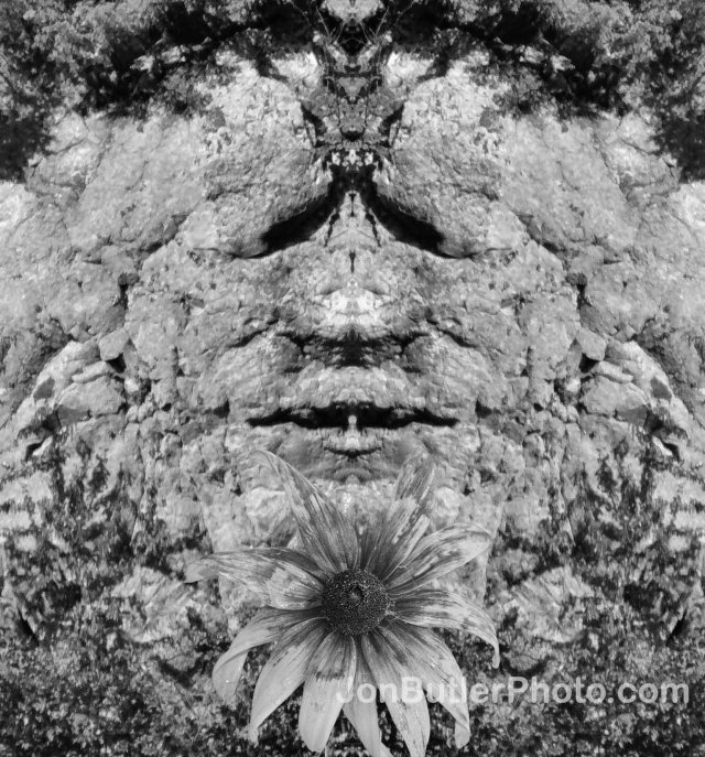 Flower Sermon watermark
