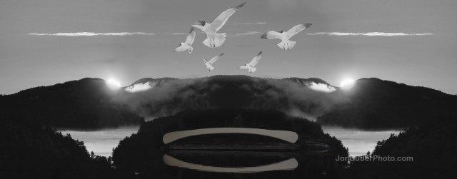 Gulls watermark