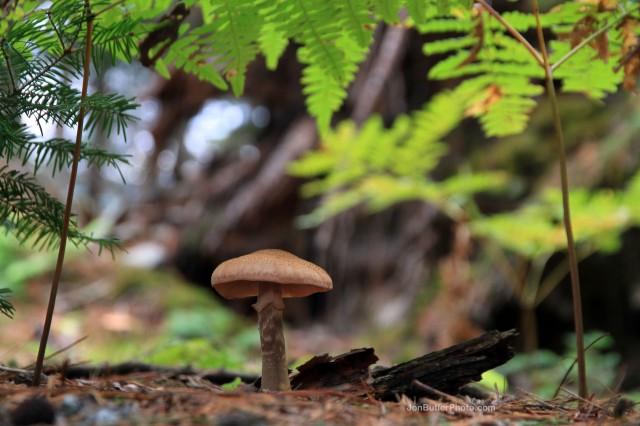 Mushroom 1 photo IMG_5694 watermark