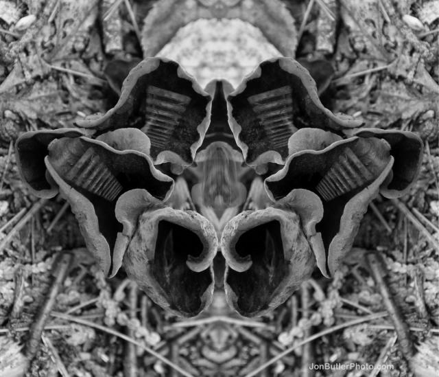 Mushroom 3 photo IMG_5636 watermark