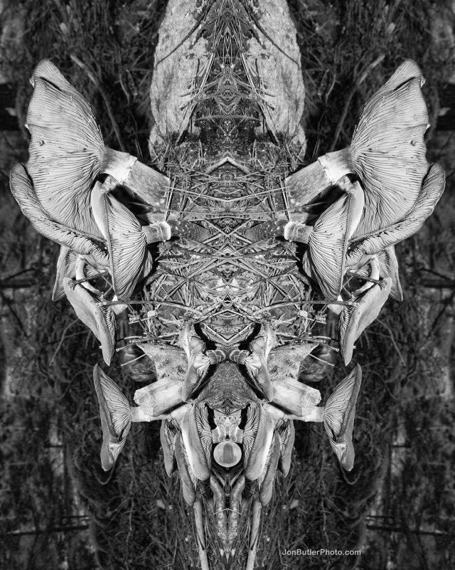 Mushroom 4 watermark