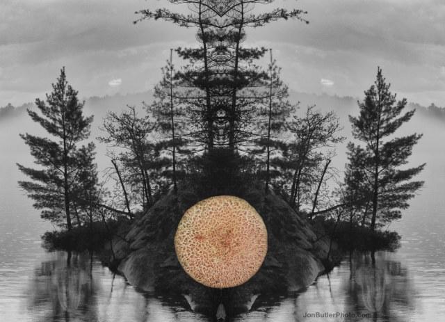 Mushroom 7 watermark