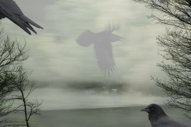 Crow watermark